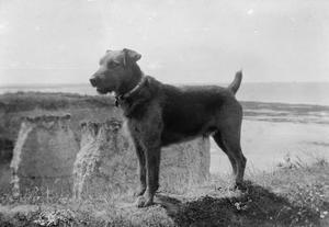 ANIMALS ON THE HOME FRONT DURING THE FIRST WORLD WAR
