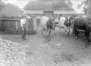 AGRICULTURE IN BRITAIN DURING THE FIRST WORLD WAR