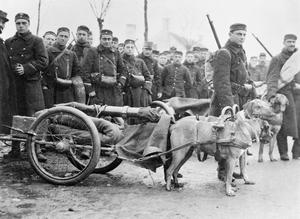 THE BELGIAN ARMY ON THE WESTERN FRONT, 1914-1918