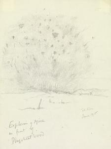 Explosion of Mine in front of Ploegsteert Wood, June 1915