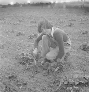 CECIL BEATON PHOTOGRAPHS: WOMEN'S HORTICULTURAL COLLEGE, WATERPERRY HOUSE, OXFORDSHIRE, 1943