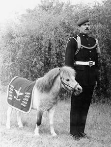 MASCOTS IN THE BRITISH ARMY