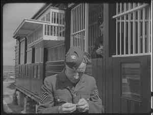 RAF PIGEON 'GUSTAVE' - THE FIRST TO BRING BACK A REUTERS MESSAGE FROM NORMANDY [Allocated Title]