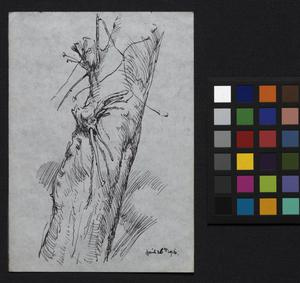 Sketch of a tree trunk - at St Omer