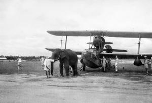 WITH THE FLEET AIR ARM IN INDIA, JUNE 1944