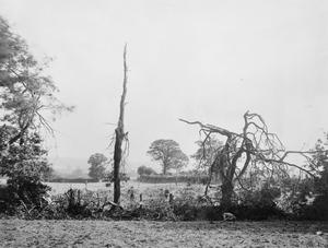 DAMAGE CAUSED TO TREES WHEN THE GERMAN AIRSHIP L.32 WAS SHOT DOWN NEAR BILLERICAY, ESSEX