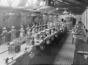 WOMEN MUNITION WORKERS IN THE FIRST WORLD WAR