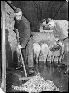 PIG FOOD: PIG CLUBS IN WARTIME LONDON, 1943