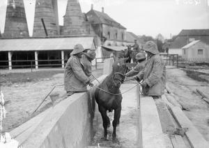 THE ROYAL ARMY VETERINARY CORPS ON THE WESTERN FRONT, 1914-1918.