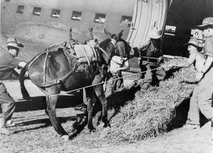 ANIMALS IN WAR 1939-1945