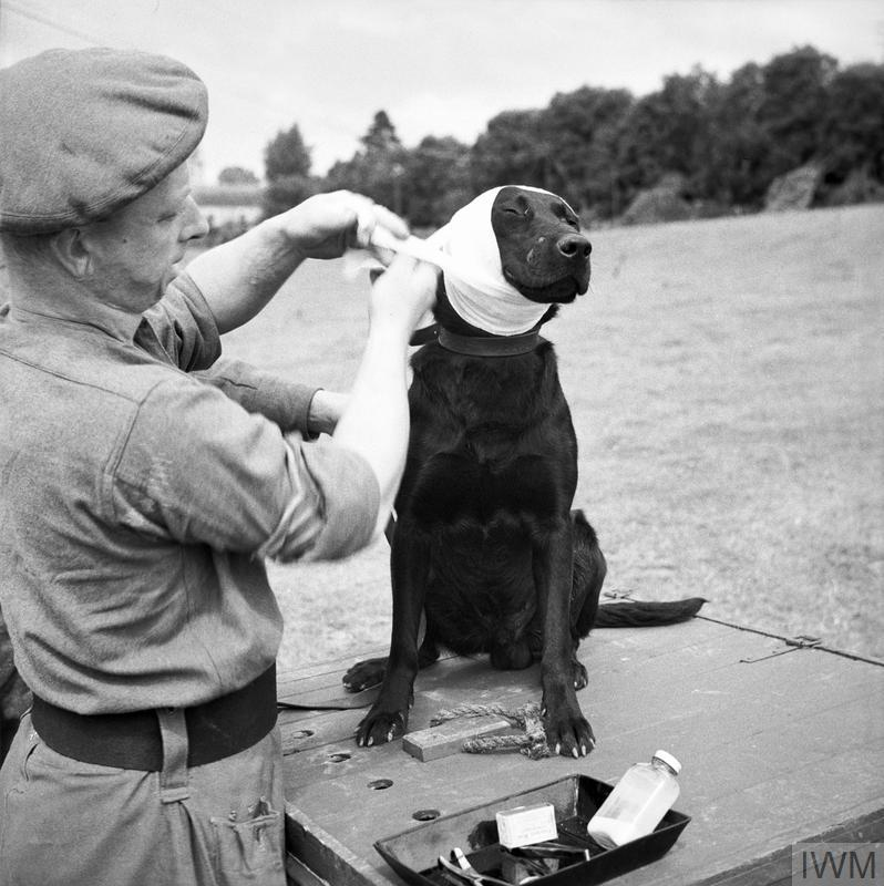 ANIMALS IN WAR 1939-1945
