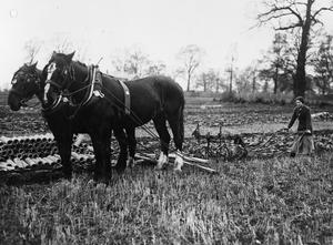 THE WOMEN'S WORK IN AGRICULTURE, 1914-1918