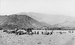THE IMPERIAL CAMEL CORPS IN THE ARAB REVOLT, 1917-1918