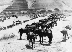 EGYPT AND PALESTINE 1914 - 1918