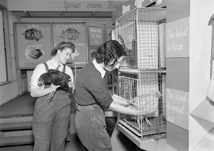 MINISTRY OF INFORMATION EXHIBITIONS DURING THE SECOND WORLD WAR, LONDON, ENGLAND, UK, 1942