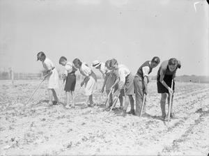EDUCATION AND AGRICULTURE AT ASHWELL MERCHANT TAYLORS SCHOOL, NEAR BALDOCK, HERTFORDSHIRE, ENGLAND, 1942