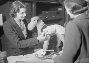 BLACKOUT ACCESSORIES FOR SALE, SELFRIDGE'S, LONDON, ENGLAND, C 1940