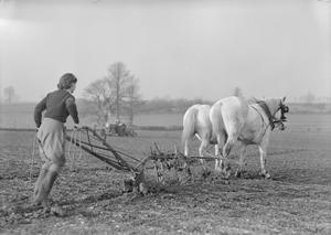 WOMEN'S LAND ARMY TRAINING AT CANNINGTON FARM, SOMERSET, ENGLAND, C 1940