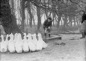 WOMEN'S LAND ARMY TRAINING, PROBABLY AT CANNINGTON FARM, SOMERSET, ENGLAND, C 1940