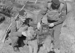 WAR DOG TRAINING IN BRITAIN, C 1940