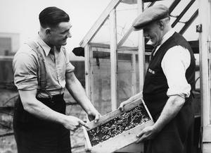 DIG FOR VICTORY: LIFE ON A WARTIME ALLOTMENT, ACTON, MIDDLESEX, ENGLAND, 1940