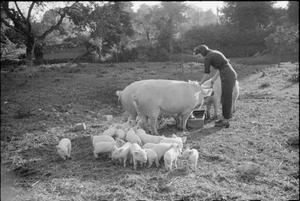 AUTUMN ON AN ENGLISH FARM: AGRICULTURE IN BRITAIN, 1941