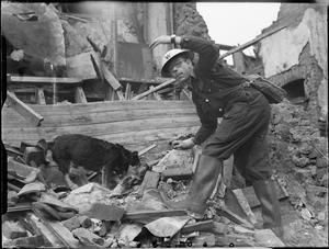 AIR RAID PRECAUTIONS DOG AT WORK IN POPLAR, LONDON, ENGLAND, 1941