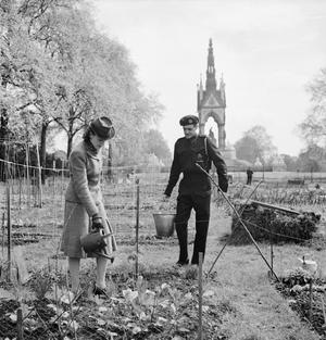 DIG FOR VICTORY: WORKING ON AN ALLOTMENT IN KENSINGTON GARDENS, LONDON, 1942
