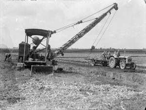 THE WORK OF THE WOMEN'S LAND ARMY IN THE  RECLAMATION OF FEN LAND, CAMBRIDGESHIRE, ENGLAND, 1942