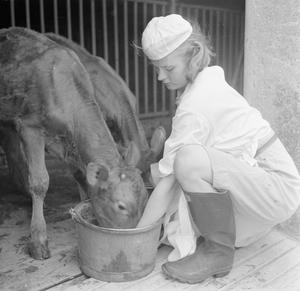 PARSONAGE FARM: DAIRY FARMING IN DEVON, ENGLAND, 1942