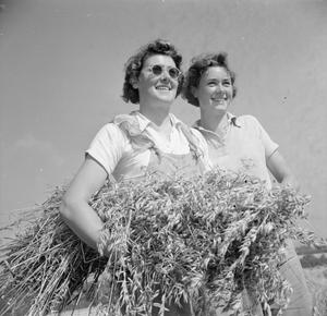 HARVESTING AT MOUNT BARTON, DEVON, ENGLAND, 1942