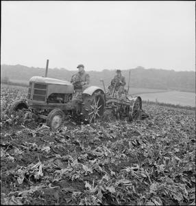 PRODUCING YOUR SUGAR: THE GROWING AND PROCESSING OF SUGAR BEET, BRITAIN, 1942