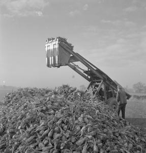 PRODUCING YOUR SUGAR: THE GROWTH AND PROCESSING OF SUGAR BEET IN BRITAIN, 1943