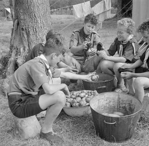 BOY SCOUTS PICK FRUIT FOR JAM: LIFE ON A FRUIT-PICKING CAMP NEAR CAMBRIDGE, ENGLAND, UK, 1943