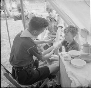 BOY SCOUTS PICK FRUIT FOR JAM: LIFE ON A FRUIT-PICKING CAMP NEAR CAMBRIDGE, ENGLAND, UK, 1943