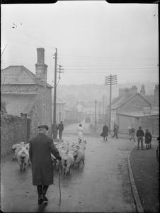 BAMPTON FAIR: PONY, SHEEP AND CATTLE SALES IN BAMPTON, DEVON, ENGLAND, UK, OCTOBER 1943