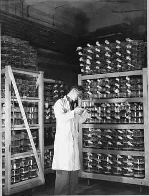 PENICILLIN PAST, PRESENT AND FUTURE: THE DEVELOPMENT AND PRODUCTION OF PENICILLIN, ENGLAND, 1943