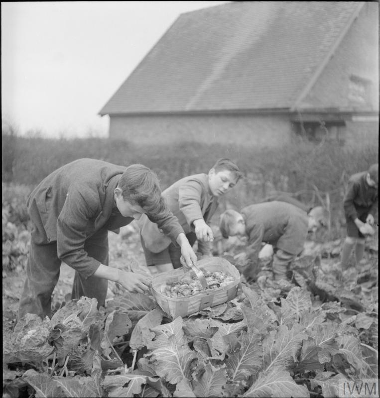 VILLAGE GARDENS FEED SCHOOLCHILDREN: FOOD PRODUCTION AT KNIGHTON-ON-TEME, WORCESTERSHIRE, ENGLAND, UK, 1943