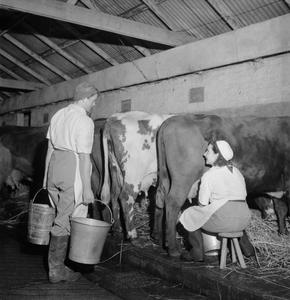 LANDGIRL'S DAY: EVERYDAY LIFE AND AGRICULTURE IN WEST SUSSEX, ENGLAND, UK, 1944