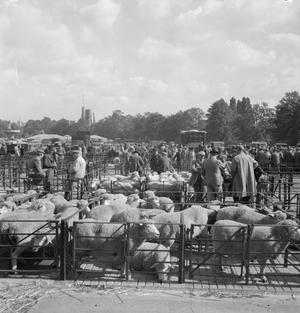 CATTLE MARKET: EVERYDAY LIFE AT CATTLE MARKETS IN KENT, ENGLAND, UK, 1944