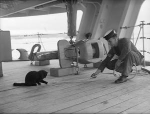 A MUCH TRAVELLED CAT. 10 JULY 1942.