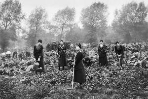 THE WOMENS AUXILIARY FORCE ON THE HOME FRONT, 1914-1918