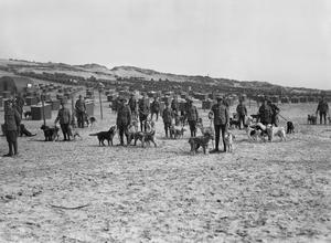 WAR DOGS DURING THE FIRST WORLD WAR, WESTERN FRONT, 1918