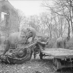 ANIMALS AT WAR: CIRCUS ELEPHANTS CLEAR BOMB DAMAGE, HAMBURG, NOVEMBER 1945