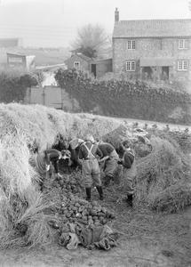 WOMEN'S LAND ARMY TRAINING, CANNINGTON, SOMERSET, ENGLAND, C 1940