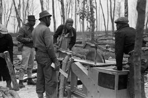 THE BRITISH HONDURAS FORESTRY UNIT IN BRITAIN, 1941