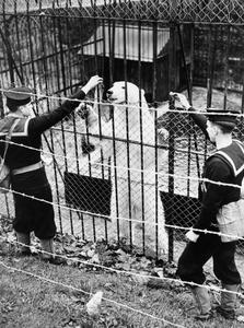 ANIMAL MASCOTS IN THE ROYAL NAVY DURING THE SECOND WORLD WAR