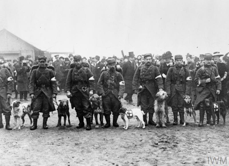 A section of French Red Cross dog handlers and their dogs line up for inspection before leaving for a forward area, somewhere on the Western Front, 1914.