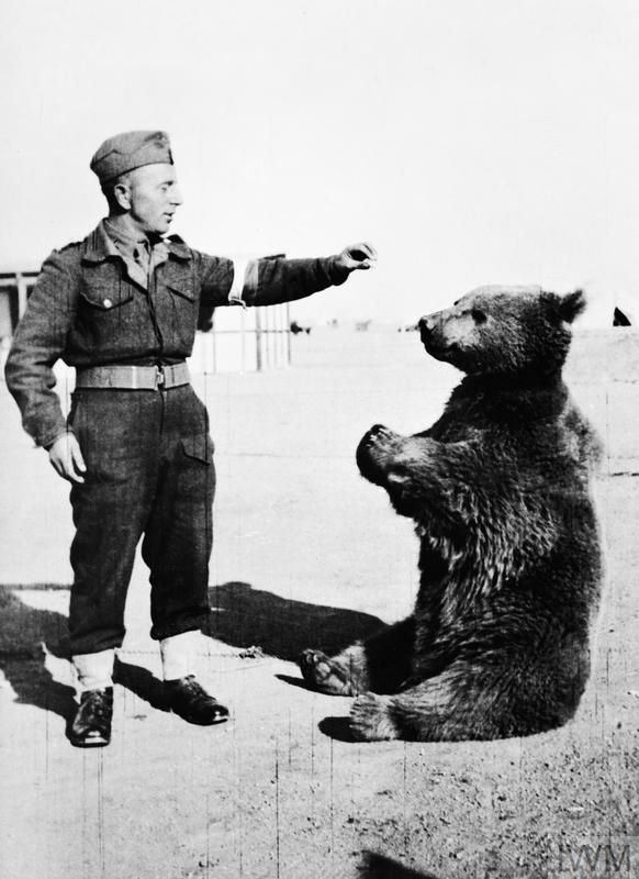 Wojtek with a soldier of the Polish 22nd Transport Artillery Supply Company.