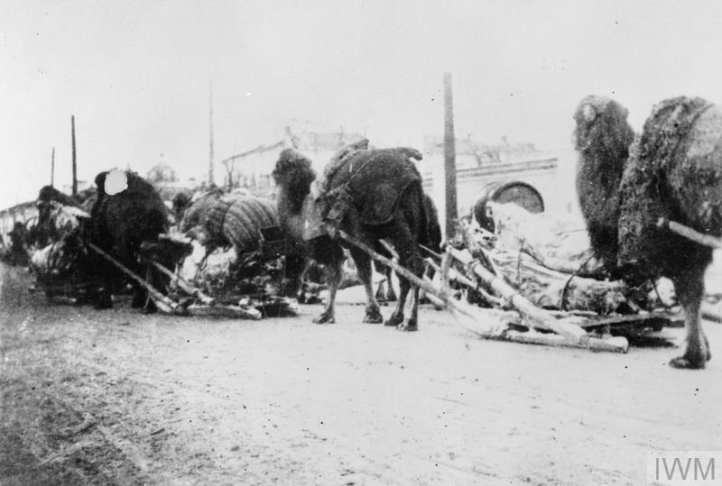 ANIMALS IN WAR 1914 - 1918